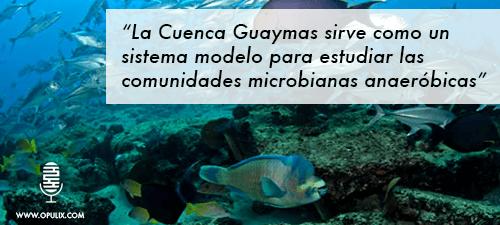 Guayamas-final