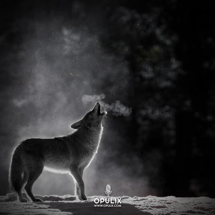 Un lobo en la noche